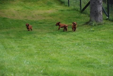 3 av gjengen springer om kapp